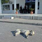 This dog was not dead, but probably very bored.