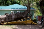 A school bus was crushed by an African baobab tree toppled by Hurricane David in 1979.