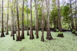 Honey Island Swamp, Louisiana