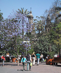 Plaza de Armas is the historic center of Santiago. Besides the Cathedral, the Museo Histórico Nacional and the Main Post Office can be found here. And there are always a lot of people on the open square.