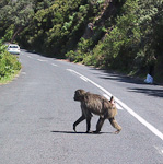 Further south there is a colony of baboons.