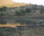 At 6 in the morning on the 10th of October, 2002, I drove into the Pilanesberg National Park. The first animals I saw were some hippos in a lake.