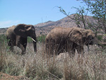 I also came across some elephants next to the road.