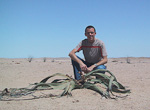 One day I drove 40-50 kilometer into the Welwitschia Plains to see the welwitschia plant. This plant can only be found in certain areas of Namibia and Angola, and it is believed that they can grow for 2000 years.