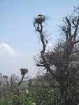 The Chellah a haven for birds and butterflies, and there are storks' nests everywhere.