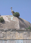 A stork on the roof of a building.