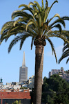 The Transamerica Pyramid from 1972 is the tallest building in the city, at 260 meters.