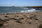 These elephant seals spend a few months every year at this beach at Point Piedras Blancas. The rest of the year they are scattered around in the sea.