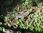 Just off the path, I saw this iguana. Not very dangerous, I guess...
