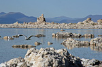 Mono Lake, just north of Yosemite National Park, is full of tufa towers made of calcium carbonate coming from underground springs. This lake has no outlets, so it is naturally salty and alkaline.