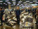 The tunas were laid out on the floor for inspection. There were thousands of tunas. Each tuna will sell for as much as 1 million yen.