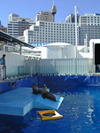 Sydney Aquarium is located in Darling Harbour. There was an outdoor pool for seals...