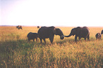 The largest animals were of cource the elephants.