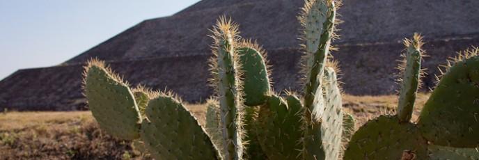 11mexico